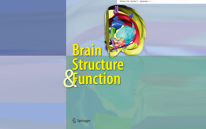 brain-structure-function