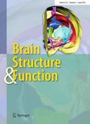 brain&structure function